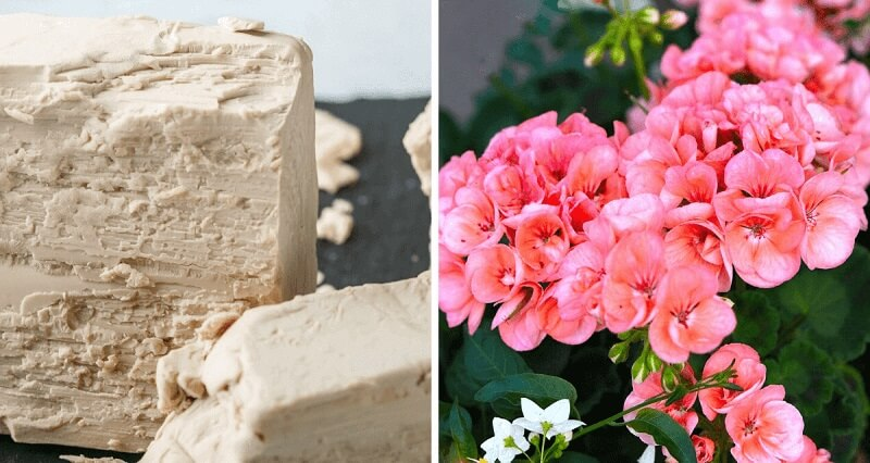 The most effective nutrient for houseplants that makes them bloom beautifully