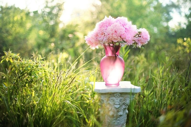 How to keep cut flowers fresh for a longer time