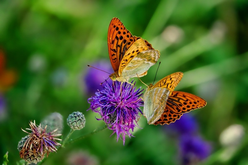 How to attract bees and butterflies into your garden