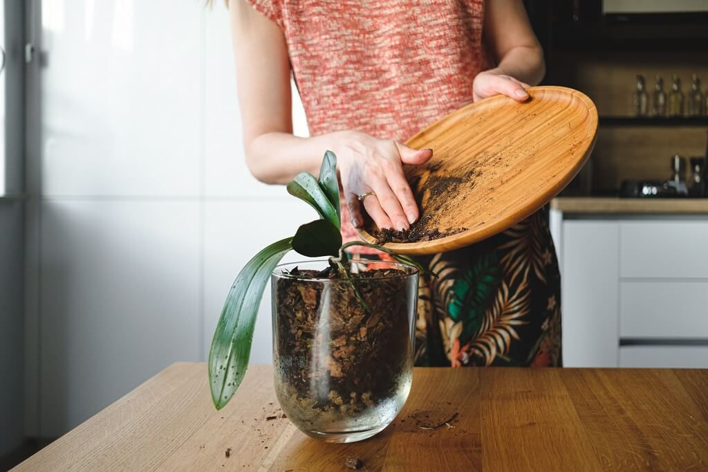 A solution that will help your orchids bloom all the time