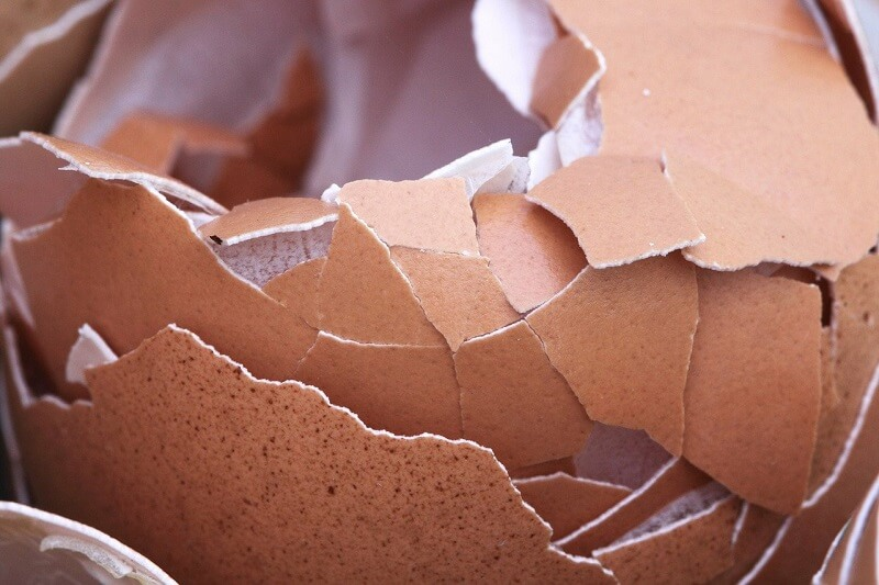 Stop throwing eggshells in the garbage! Here's how you can turn them into plant fertilizer