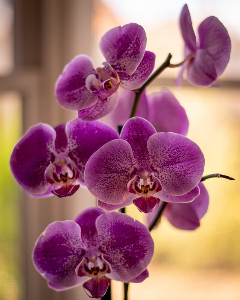 How to take care of your orchid to make it grow well and bloom beautifully