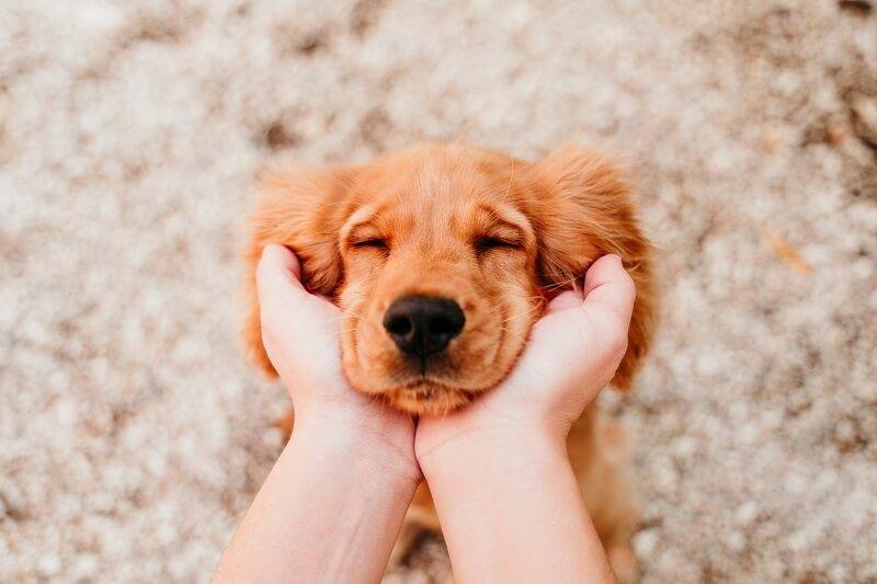 If you need a real friend, get a dog!