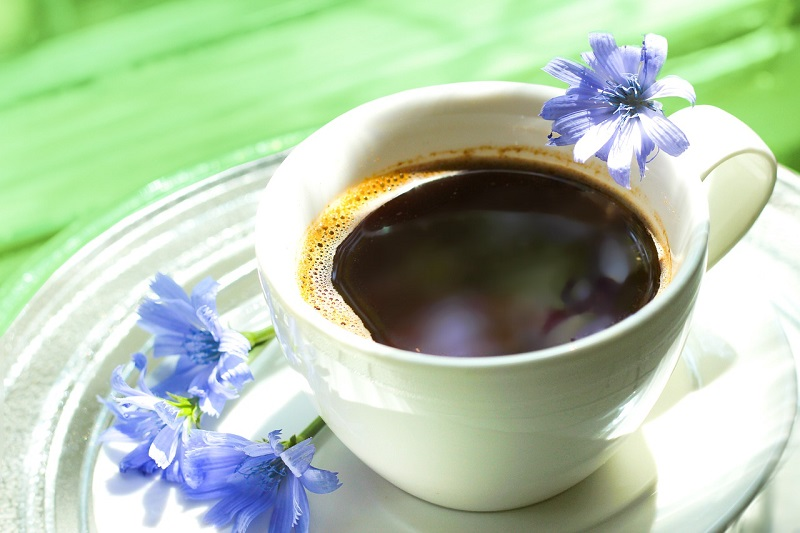 Chicory - the summer flower or grandma's coffee: benefits and recommendations